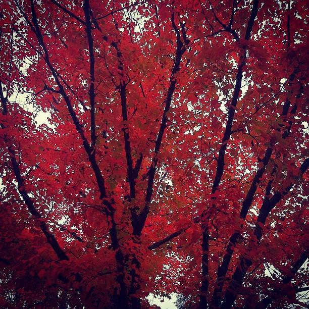 fall_thumbnail